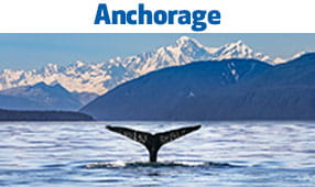 Anchorage, AK - image of whale in icy open waters